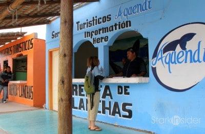 Whale-Watching-Loreto-Pacific-Ocean-2