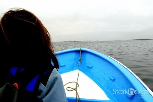 Whale watching in the Pacific Ocean