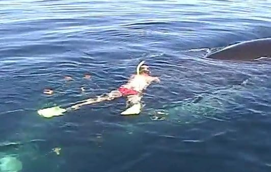 Saving Valentina - a Humpback Whale is cut free from fishing nets in the Sea of Cortez.