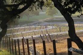 Vineyards - Carmel Valley Ranch