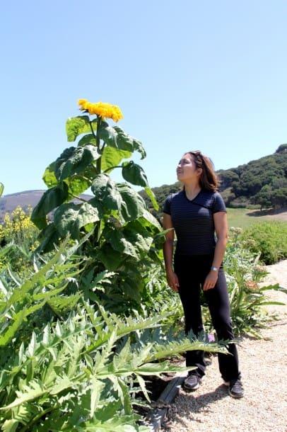 Organic Gardens at Carmel Valley Ranch