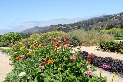 Carmel-Valley-Ranch-Organic-Garden-7