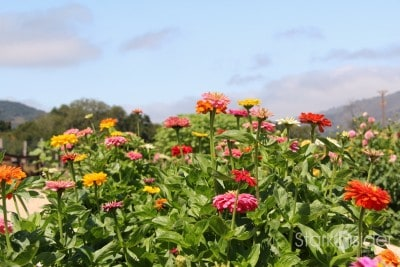 Carmel-Valley-Ranch-Organic-Garden-9