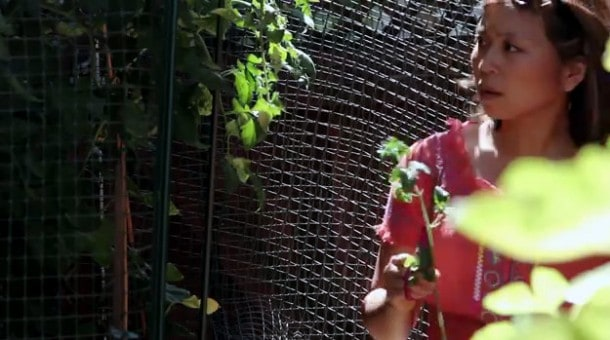 Vegetable Gardening - Tips for keeping animals out of your garden