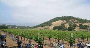 Bike Tour Napa
