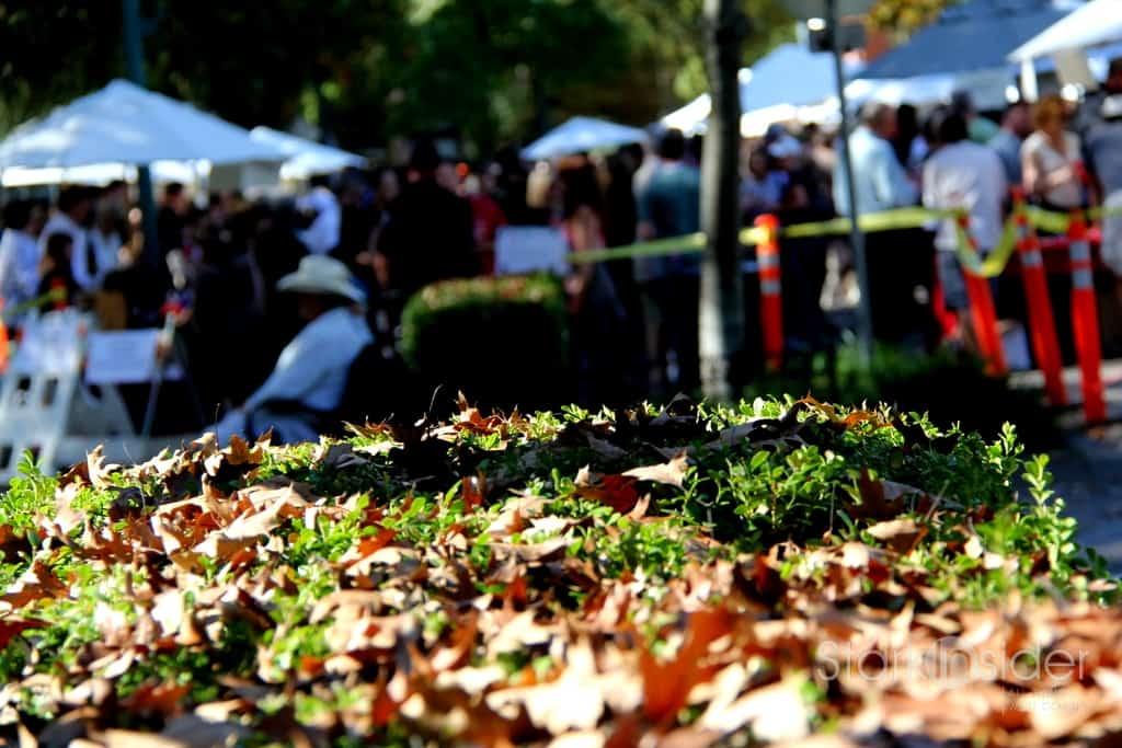 Fall in Healdsburg, Sonoma.