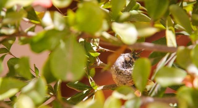 Hummingbird-Nest-Loreto-Baja-Stark-Insider