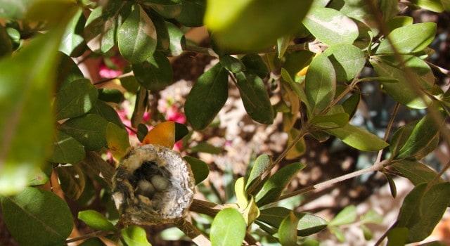 Hummingbird-Nest-Loreto-Baja-Stark-Insider-casa