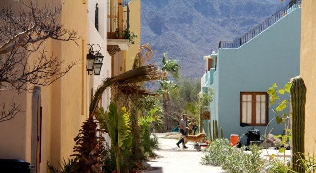 Baja News