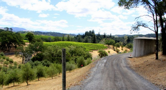 """The main roads, """"Dry Creek Road"""" and """"West Dry Creek Road,"""" are paved, but side roads, and many of those leading up to the winery tasting rooms are dirt or gravel."""