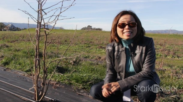 Loni on location at Robert Sinskey Vineyard in Napa. Sinskey's truffle orchard should start producing in 2-3 years.