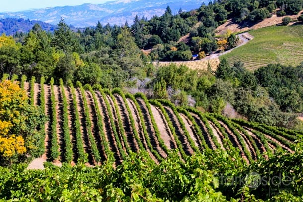 View to a Kill: Looking across Napa Valley from atop Mount Veeder.