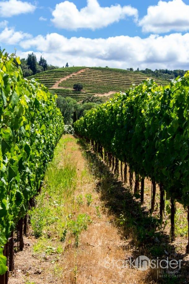 Ferrari-Carano Vineyards, Gardens - Sonoma