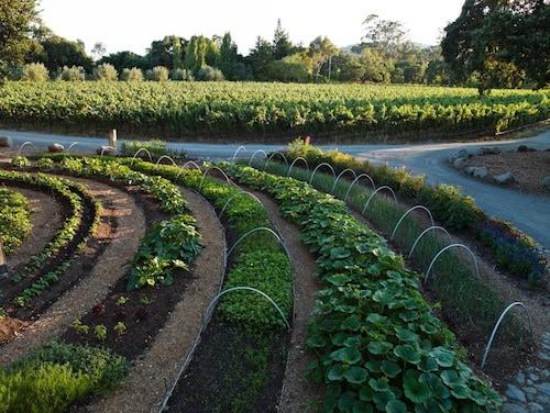 Stone Edge Farm's organic garden