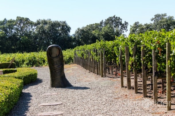 California wine consumption continues to grow,