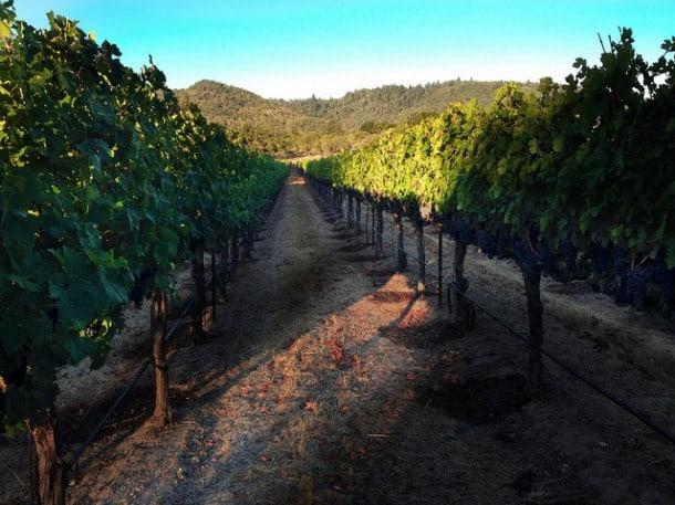 Vineyard by Craig Camp