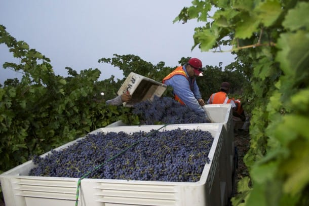 Joseph Phelps Harvest - Napa Valley