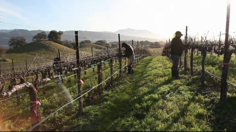 Pruning Season Wine Video