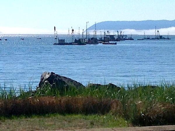 Lummi Reefnetter fishing for salmon