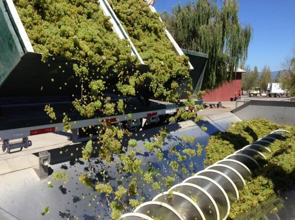 California Wine Harvest 2013