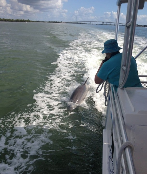 Up close with the Dolphins