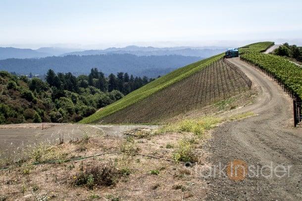 Vineyards at Clos de la Tech winery, Santa Cruz Mountains, California.