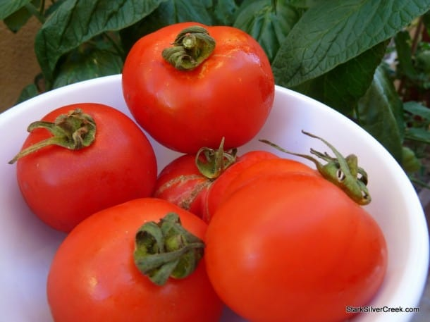 tomatoes-from-Loni-planter-box