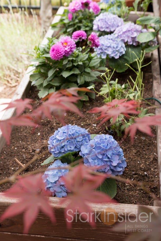 DIY Project - Build a Garden Planter