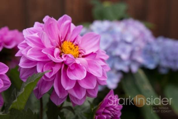 Garden-Box-Plans-Loni-California-2131
