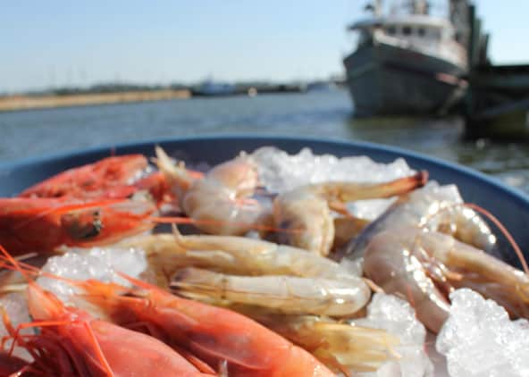 MS gulf coast offers best seafood