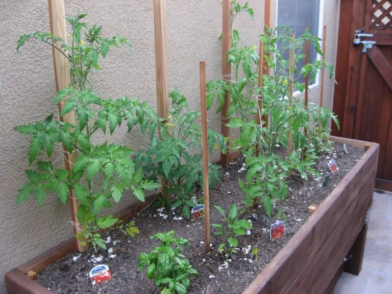 Vegetable Gardening   Planter Box Photos
