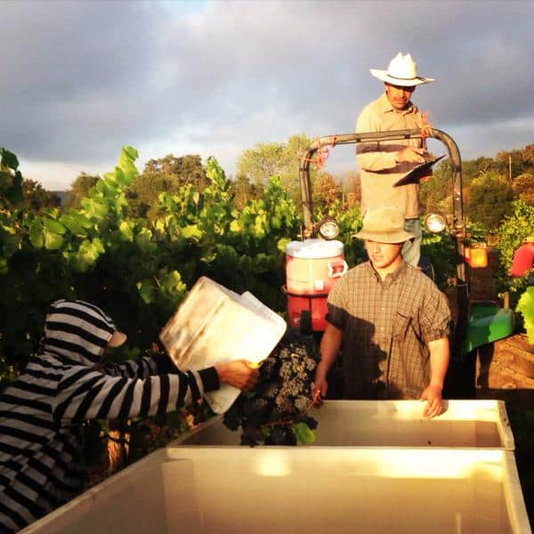Records broken in Napa with early harvest