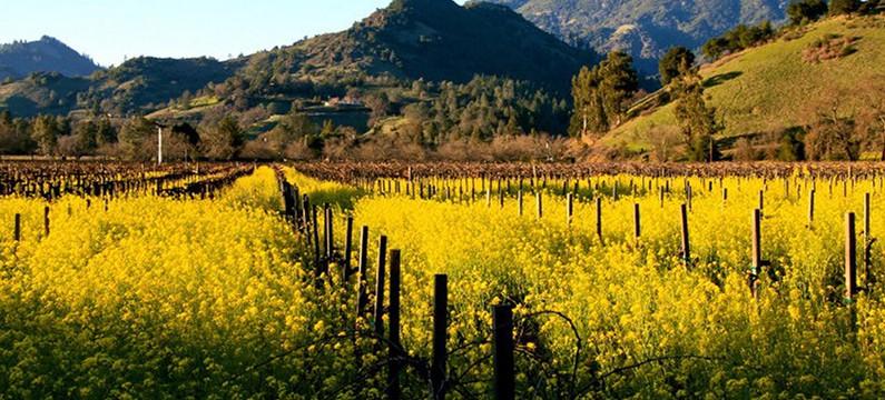 Calistoga wine country