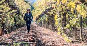 Napa Valley Vineyard - Fall
