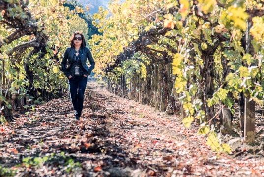 Napa Valley Vineyard - Fall