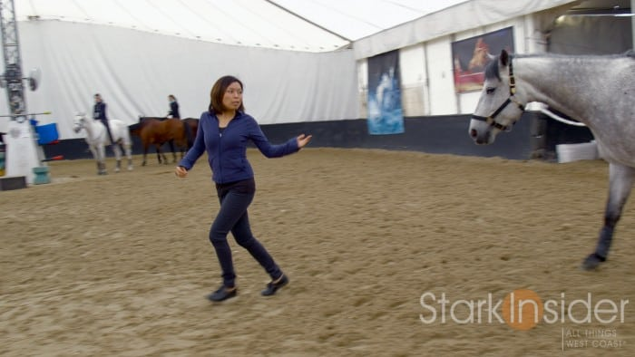 Cavalia Odysseo - Horse Training Video