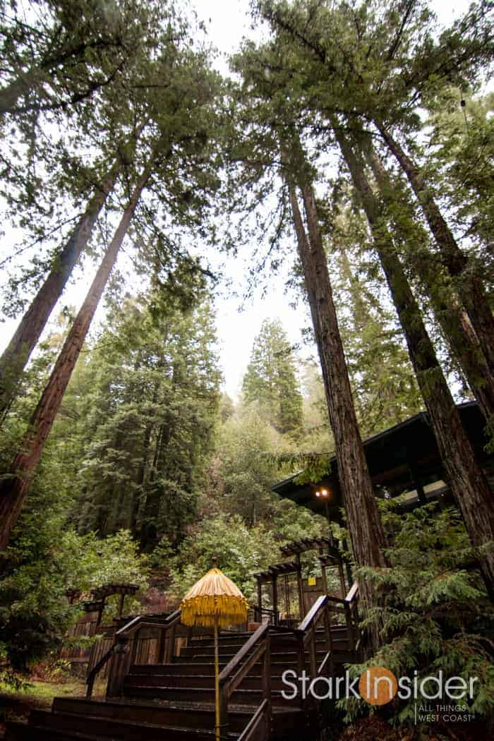 Magical Redwood Retreat - Sebastopol, Sonoma
