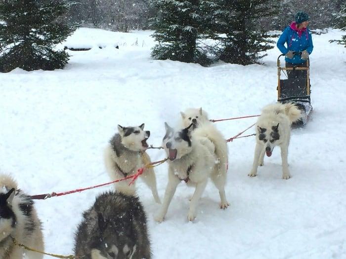 Base Camp Bigfork - Inuit dogs