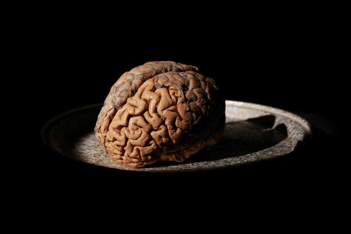 My Love Affair with the Brain utterly charming, inspiring ...