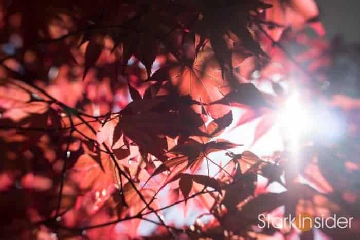 Review: Lensbaby Trio 28 lens sample photos