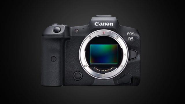Canon EOS R5: a wildlife winner?