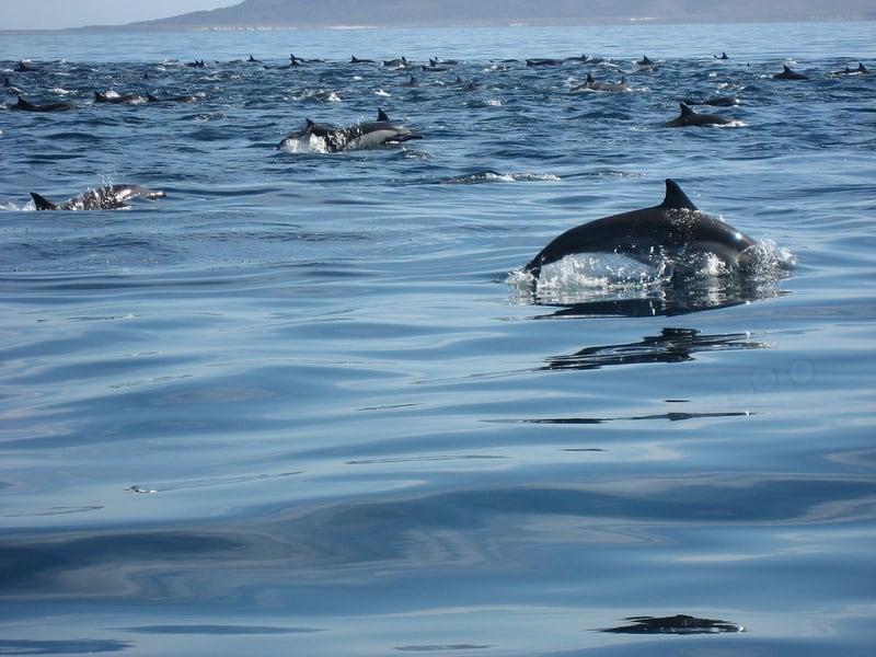Loretodolphins