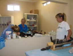 Spay Neuter Surgery at Animalandia