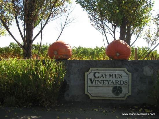 Caymus02